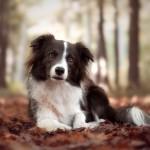Shiva4dogs_1_SocialMedia
