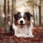 Shiva4dogs_4_SocialMedia